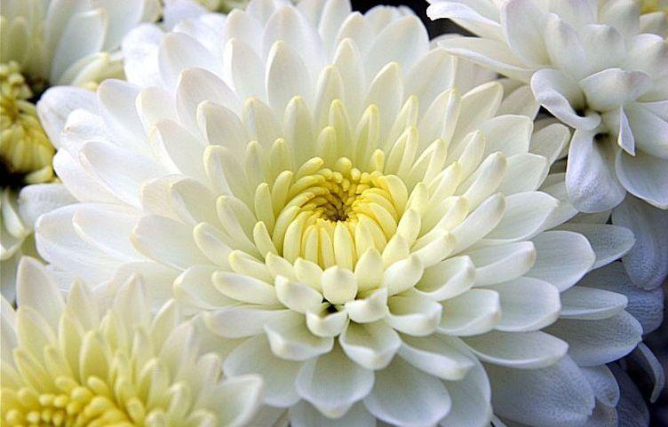 Bunga Dan Tumbuh Tumbuhan Adalah Simbol Kebangsaan Dan Pelindung Negara Simbol Negara Tumbuhan